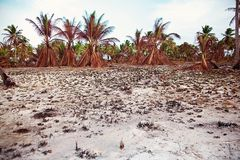 Palmeiras vermelhas secas, floresta úmida imagens de stock