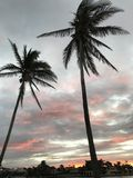 Palmen über einem Sonnenuntergang in Miami, Florida, USA Stockfoto