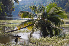 Palmen über indischem Fluss Stockbilder