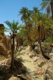 Palmen über kleinem Fluss in der Wüstenoase Stockfotografie
