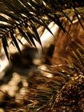 Palmen über Ozean bei Sonnenuntergang Stockfotos