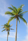 Palmen royalty-vrije stock afbeelding