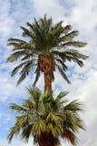 Palmen Stockfotos