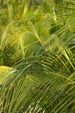 Palmen royalty-vrije stock fotografie