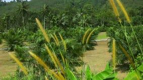 Palmen stock video