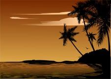 Palmen Stockbild