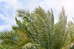 palmen Stock Foto