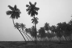 Palmen lizenzfreie stockbilder