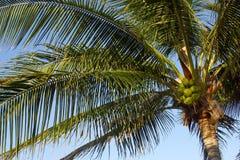 Palmen stock foto's