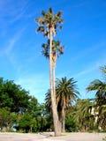Palmen Stock Afbeelding