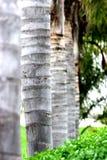 Palmen royalty-vrije stock foto's
