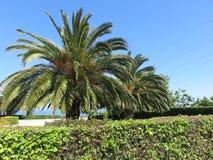 Palmen Arkivfoton