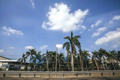 Palmen aan de Wegkant Royalty-vrije Stock Afbeeldingen