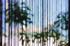 Palmen achter het gordijn Stock Foto