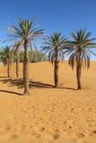 Palmen in Afrika-Wüste auf Sand Lizenzfreies Stockfoto