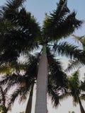 Palmen in al-Azhar park - Kaïro - Egypte Stock Fotografie