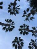 Palmen in Anaheim, Kalifornien lizenzfreies stockfoto