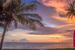 Palmen-Ansicht Stockfoto