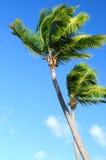 Palmen auf blauem Himmel stockbilder