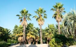 Palmen auf blauem Himmel Stockbild
