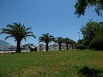 Palmen auf dem Damm in Budva, Montenegro Stockbild