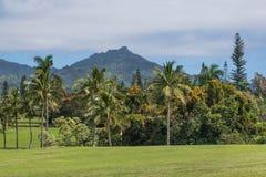 Palmen auf dem Grün lizenzfreie stockfotos