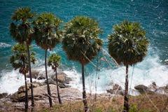 Palmen auf dem Hintergrund der Brandung Lizenzfreie Stockbilder
