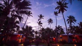 Palmen auf dem Hintergrund eines schönen Sonnenuntergangs stock video