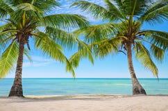 Palmen auf dem Hintergrund von einem schönen carribean Meer lizenzfreie stockbilder