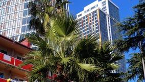 Palmen auf dem Hintergrund von Wolkenkratzern und von Hotels im beliebten Erholungsort stock video