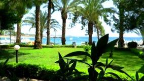 Palmen auf dem Seehintergrund stock footage