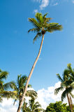 Palmen auf dem Strand Lizenzfreie Stockfotografie
