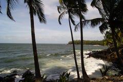 Palmen auf dem Strand Stockfotos