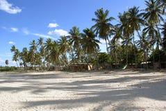 Palmen auf dem Strand Lizenzfreies Stockfoto