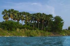Palmen auf dem Strand Stockfotografie