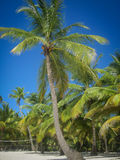 Palmen auf dem Strand Lizenzfreies Stockbild