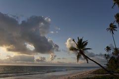 Palmen auf dem Strand am Sonnenuntergang Stockfoto