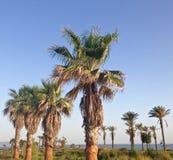 Palmen auf dem Strand von Almeria lizenzfreies stockbild