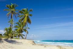 Palmen auf dem tropischen Strand Lizenzfreies Stockfoto