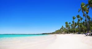 Palmen auf dem tropischen Strand, Bavaro, Punta Cana, dominikanisch lizenzfreie stockbilder