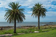 Palmen auf der Küste Stockbilder