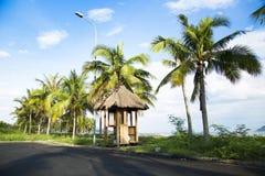 Palmen auf der Küstenlinie Stockbild