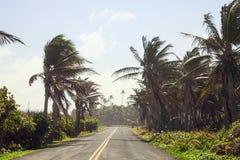 Palmen auf der Seite der Straße von San Andres Stockfotografie