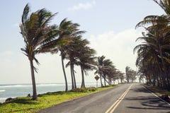 Palmen auf der Seite der Straße von San Andres Stockbilder