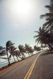 Palmen auf der Seite der Straße von San Andres Lizenzfreie Stockfotos