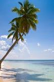 Palmen auf der Strandinsel Stockbild