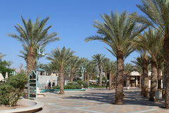 Palmen auf der Ufergegend Stockfotos