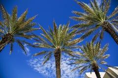 Palmen auf einem blauen Himmel Stockbild