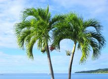 Palmen auf einem blauen Hintergrund Stockbilder