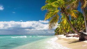 Palmen auf einem einsamen exotischen Strand stock video